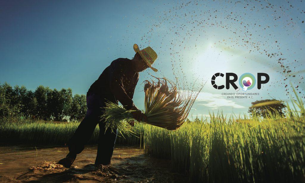 Crop_campesino